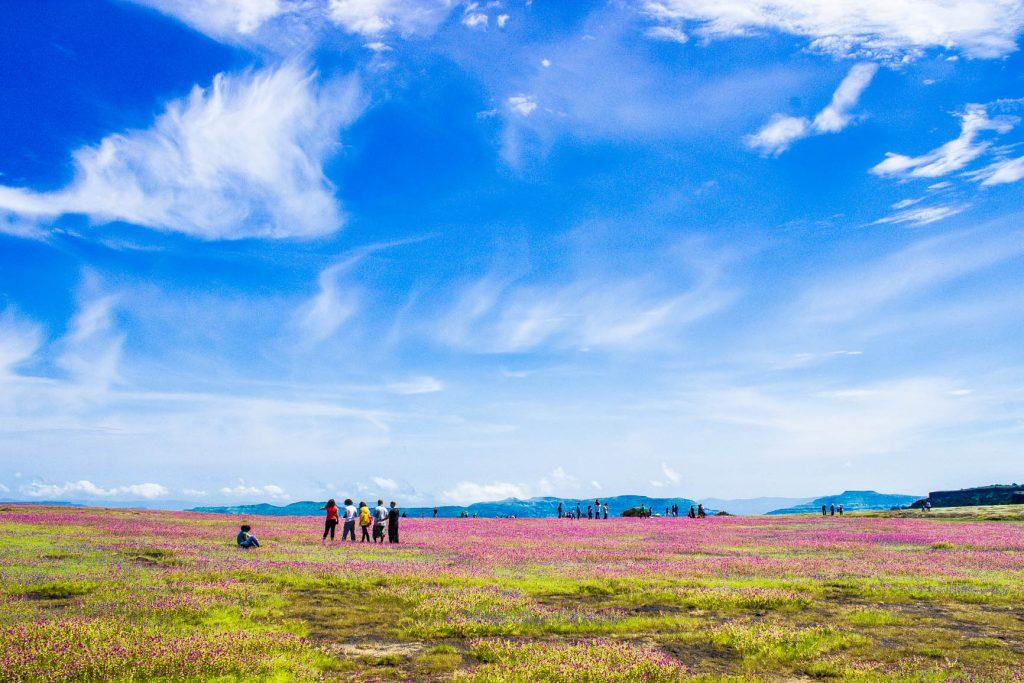 Kaas Pathar - Plateau Of Flowers