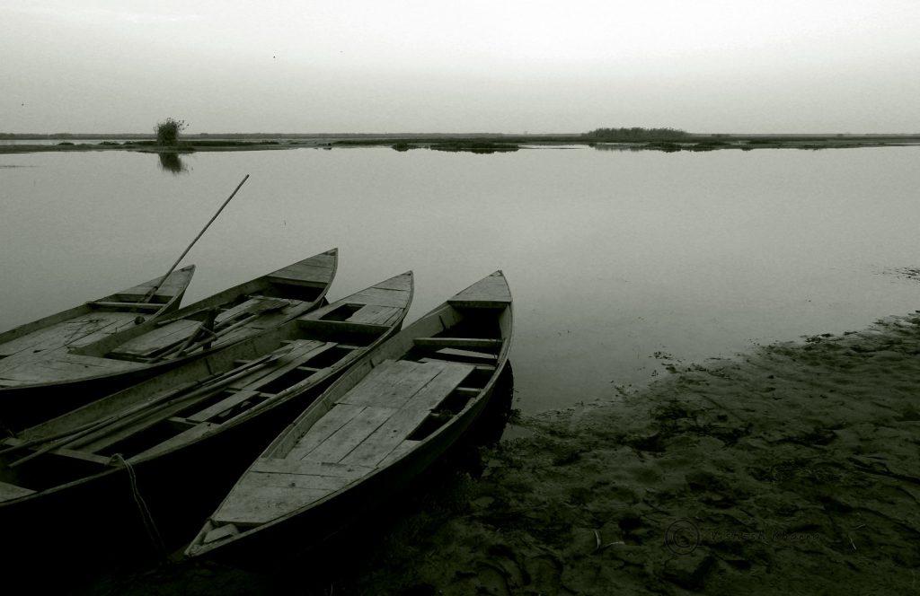 Wetland boats near the shore of Harike Wetland